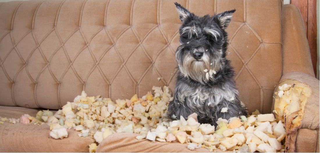 How to Stop Your Dog's Destructive Chewing - PetPlace