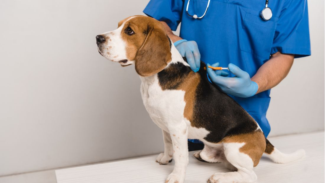 Check The Chip Day: An Overview of Microchipping Your Dog