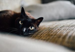 A black cat relaxes on the couch.