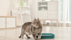 A cat walks by its green litter box