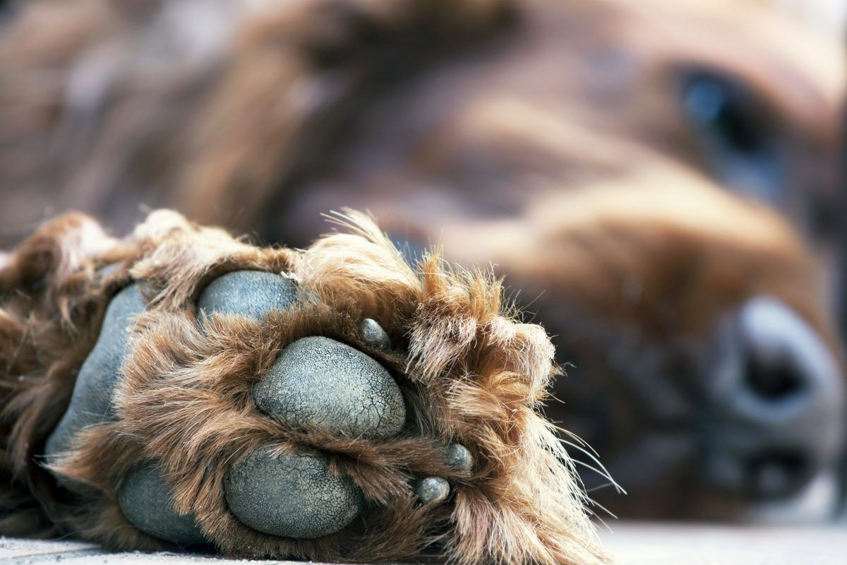 A brown dog's black paw pads pressed nearly against the camera.