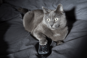 A gray cat with a television remote in their paw.