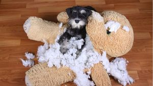 A dog poses with a chewed-up stuffed animal.