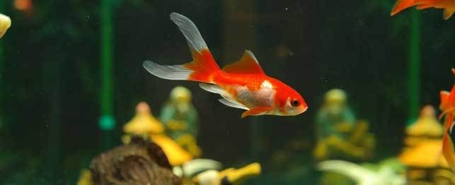A fish shortly after giving birth
