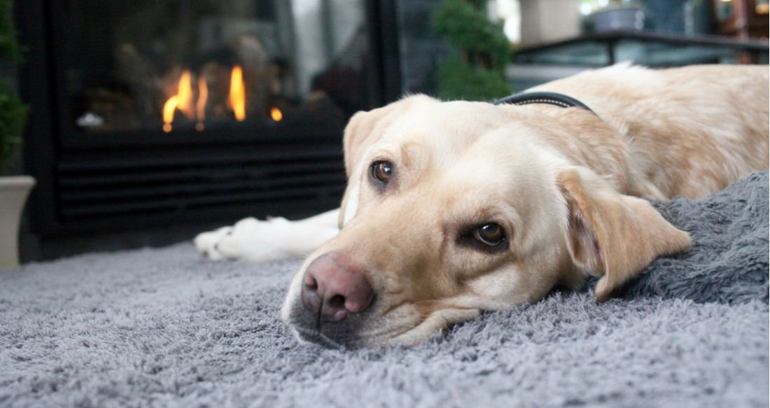 A yellow lab lies by the fire.