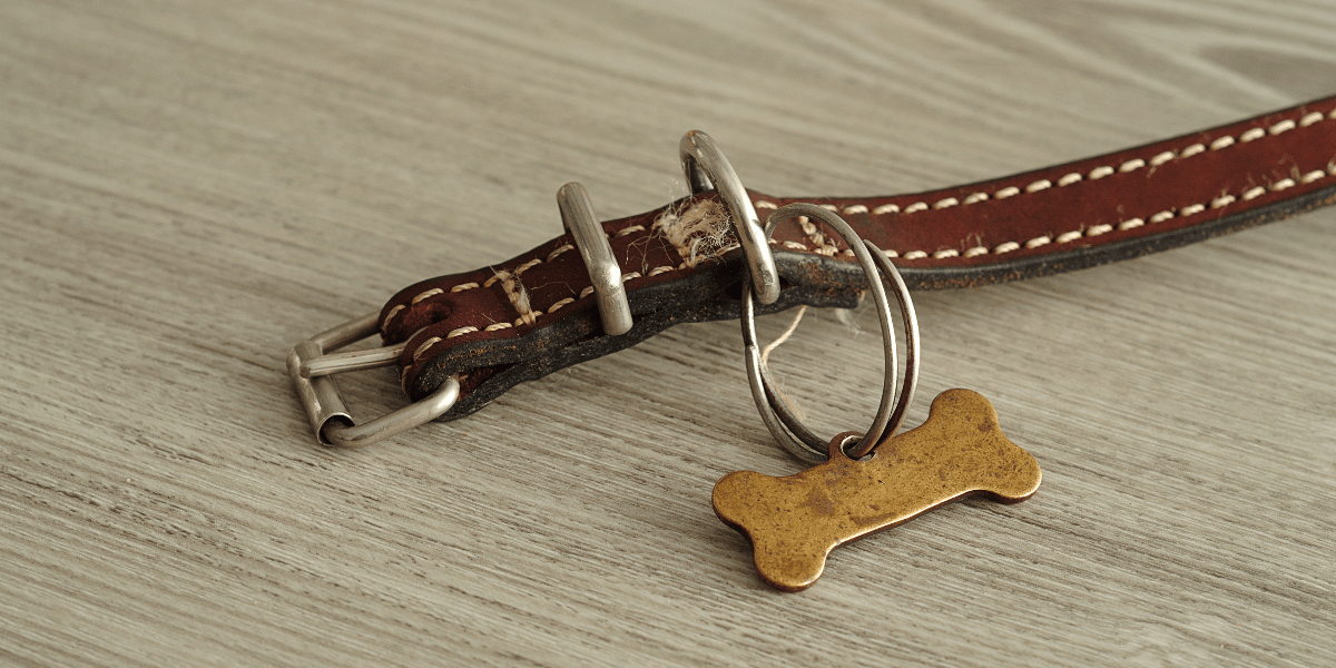 A leather dog collar without a name on a wooden table