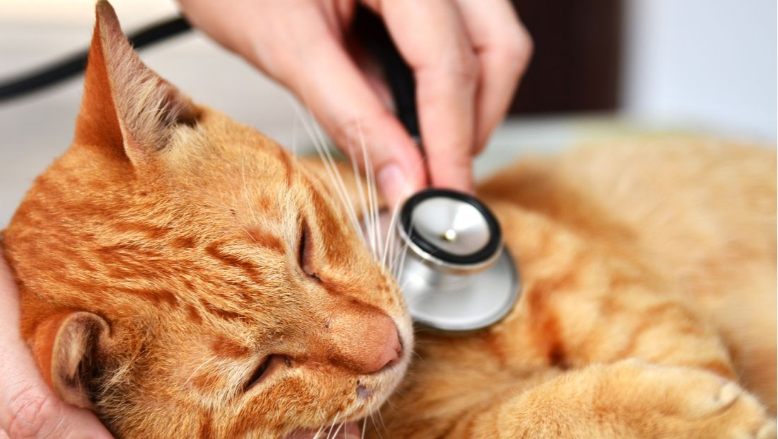 Diseases and Conditions of Cats