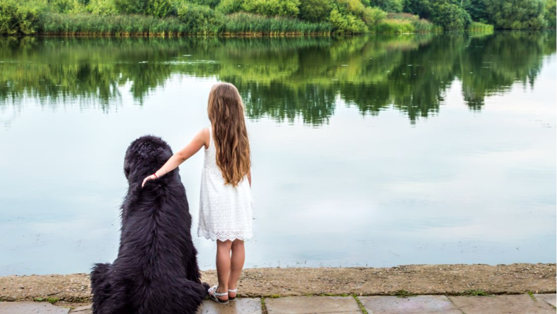 The Three Best Puppy Breeds For Kids