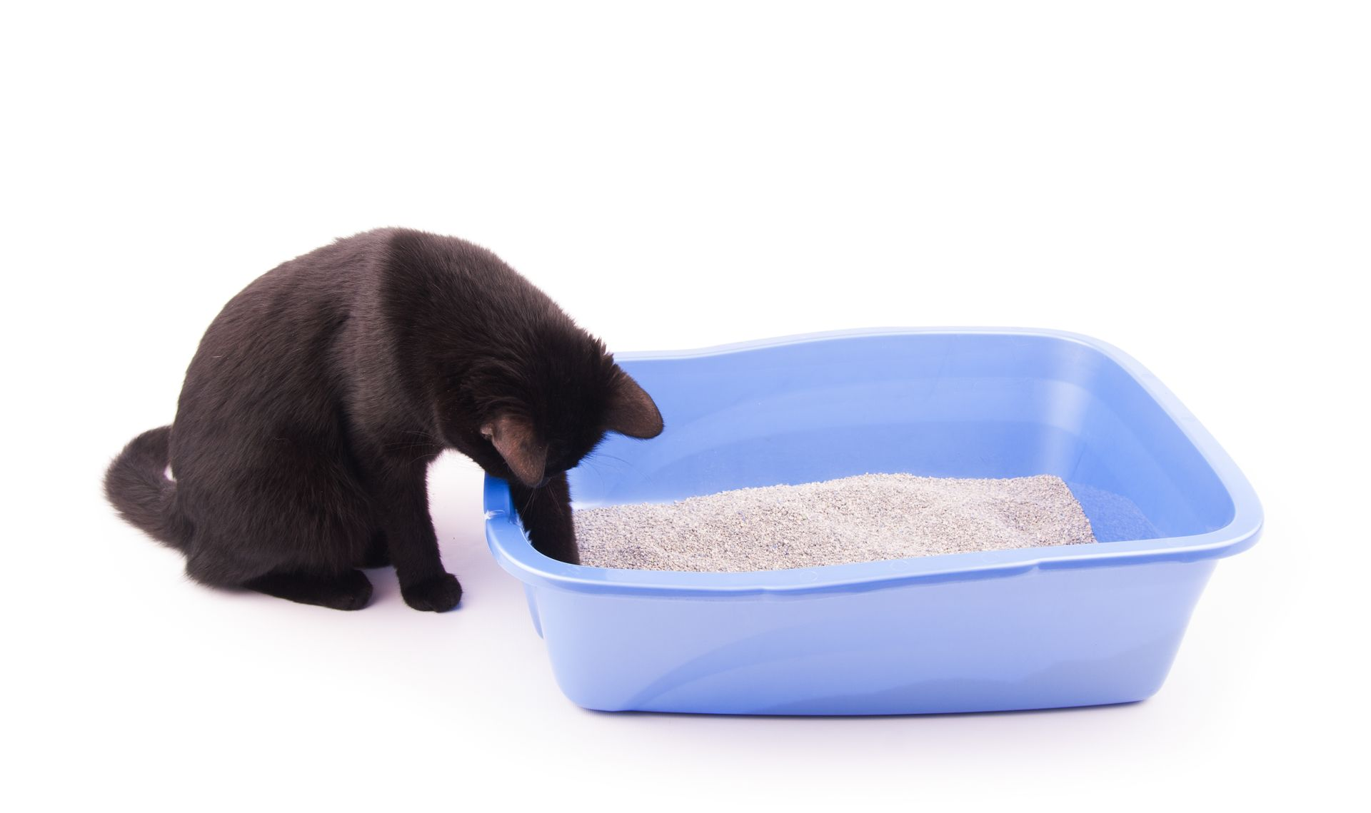 cat taking too many trips to the litter box