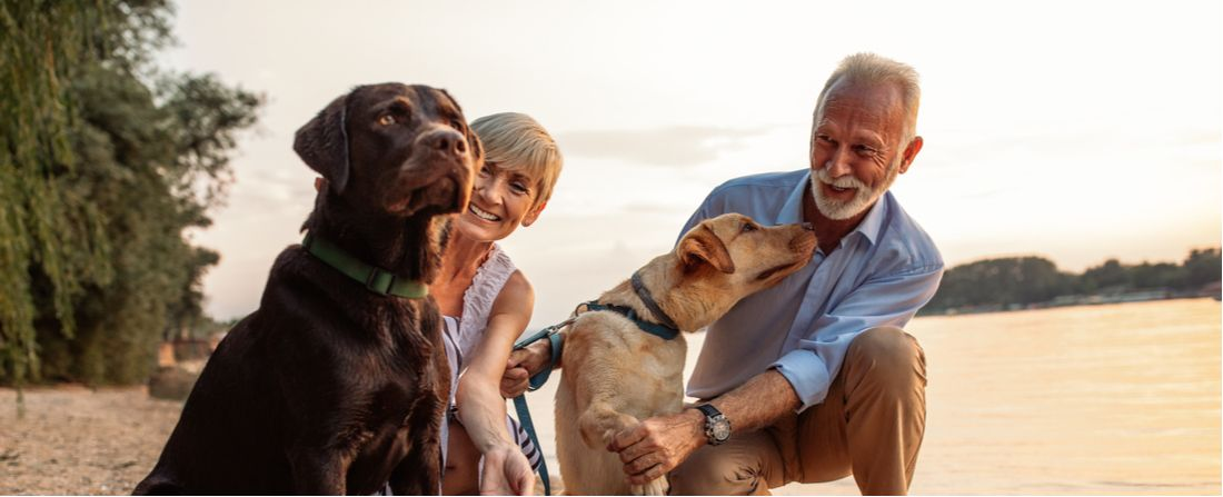 These are the best dog breeds for senior citizens.