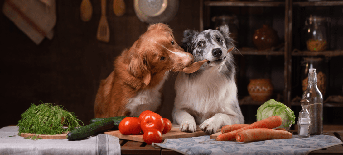 Two dogs cooking a homemade meal.