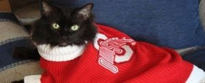 A Cat in an Ohio State University Sweater