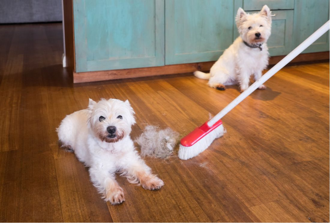 Spring is the perfect time to clean up all the fur and litter around your house.