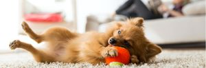 A dog rolling on it side, playing with a rubber ball.