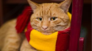 Harry Potter Scarf on Cat