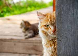 changes in cat behavior