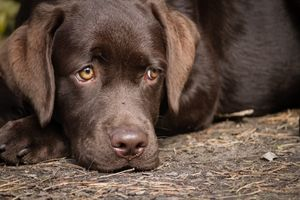 do dogs grieve