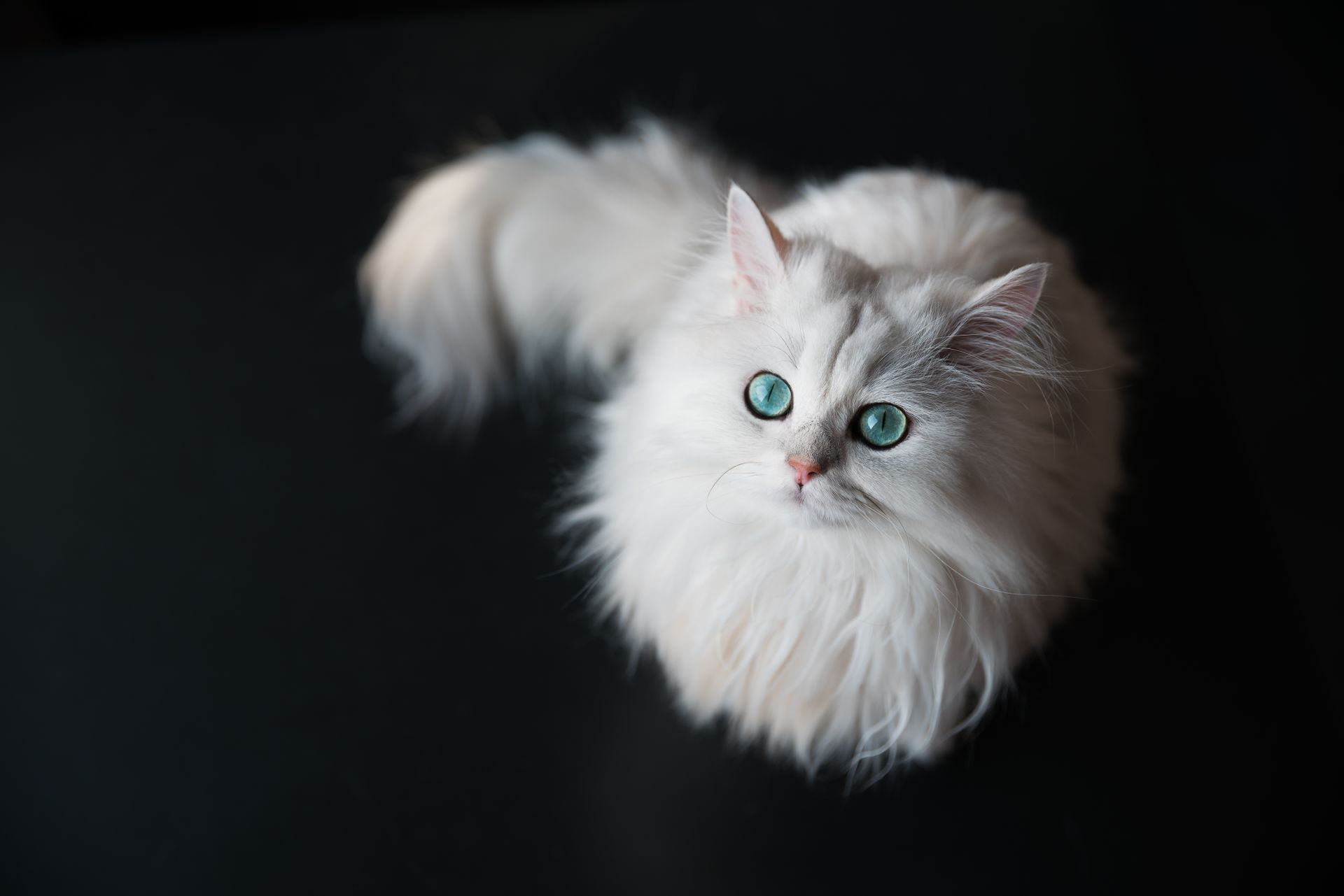 Naming Your White Cat Name Ideas For Cats With White Haircoats