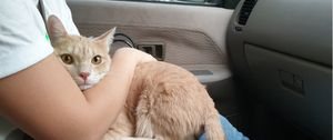 Woman hugging her cat in the car to reduce motion sickness.