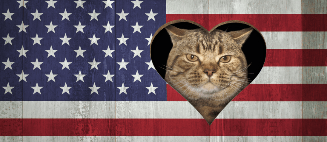 A cat's face on the American flag, in honor of pets that lived in the White House.