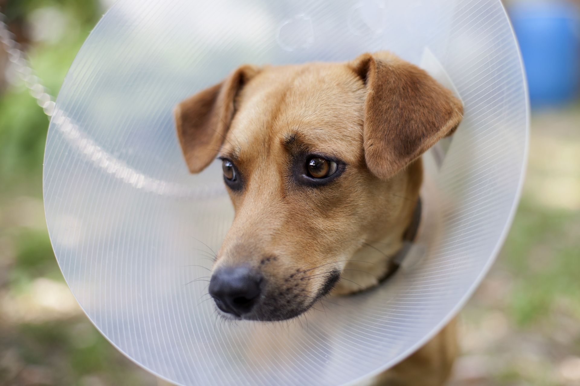 postoperative complications in dogs