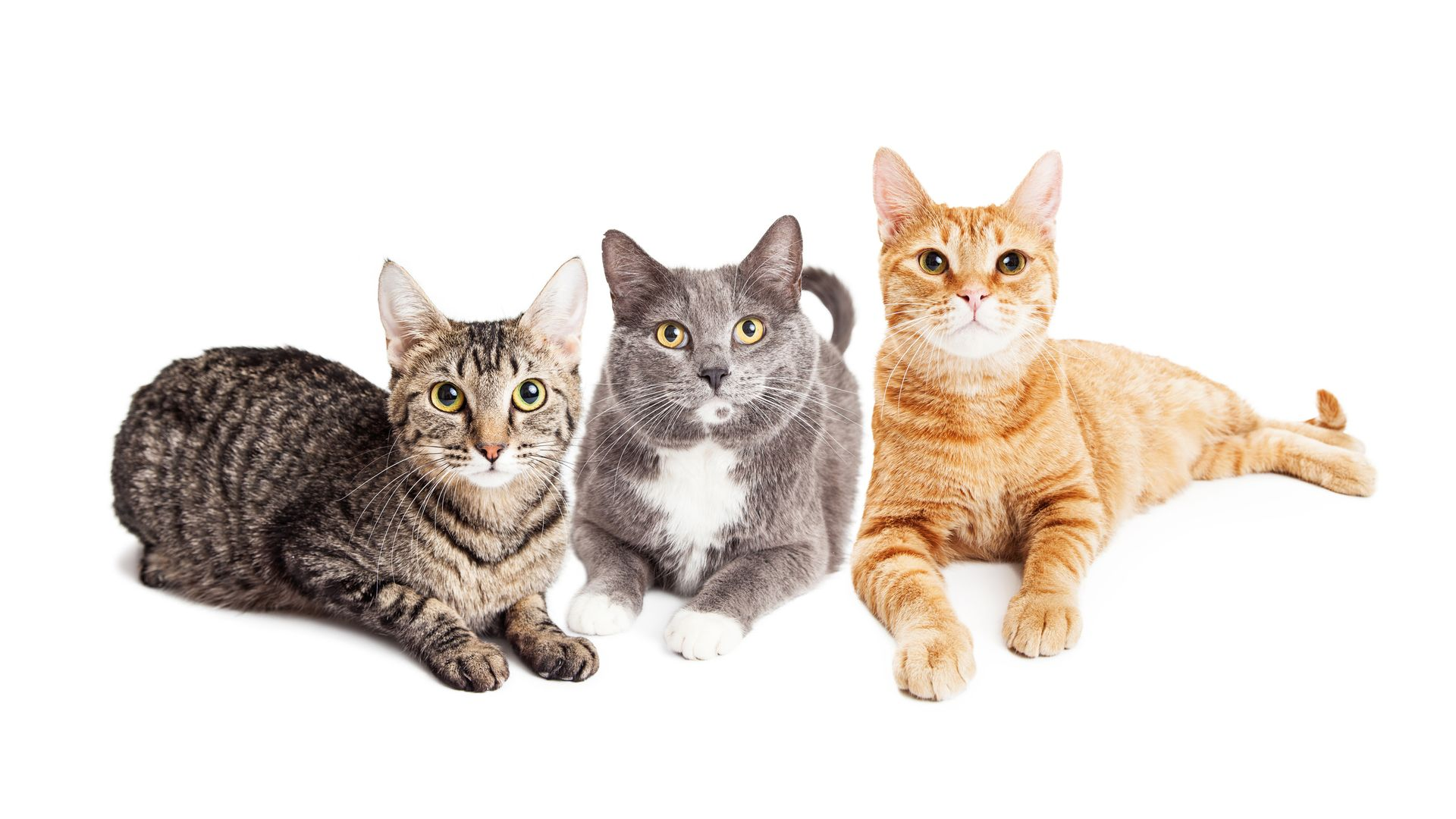 Multiple Cats household tips