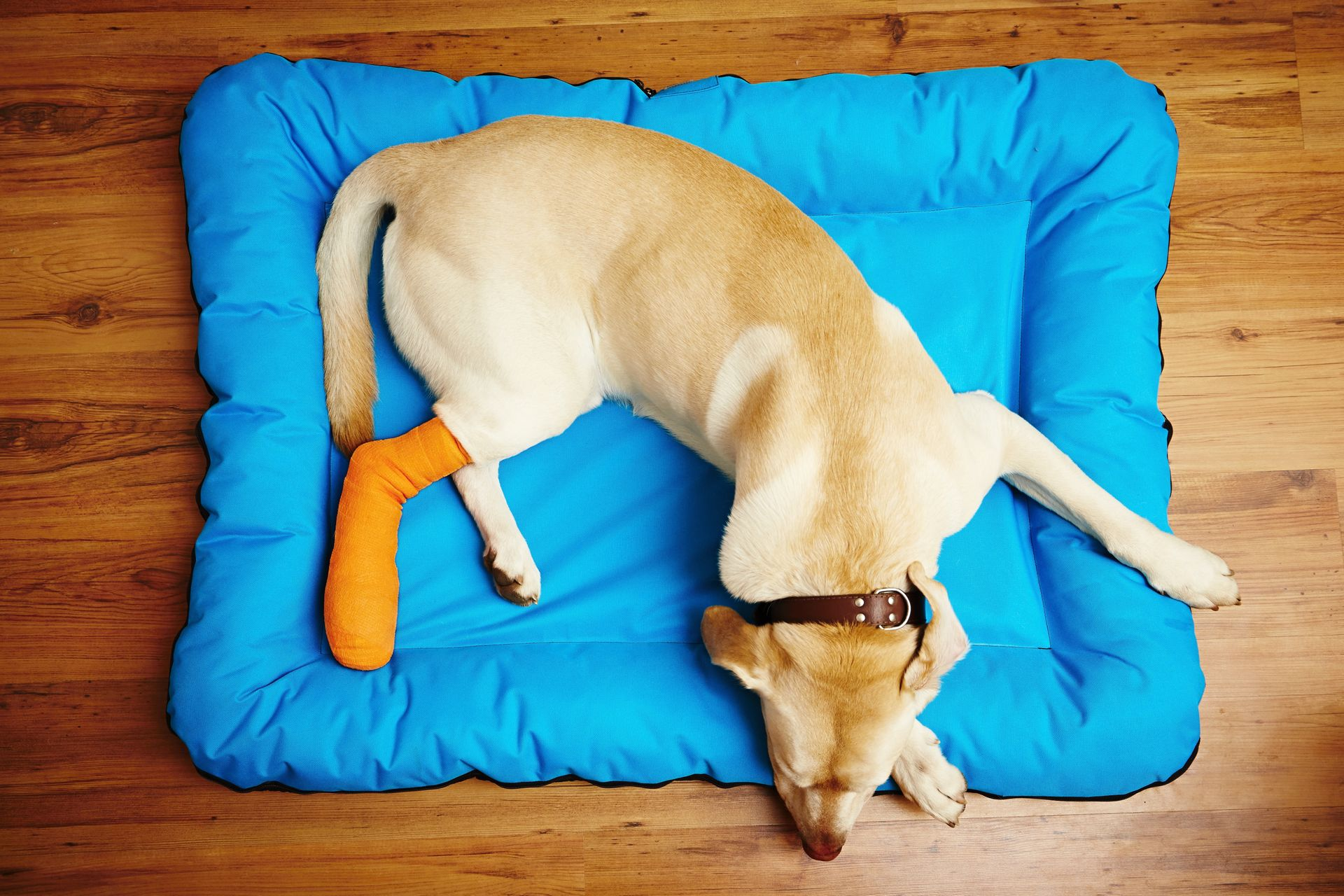 femur fracture in dogs
