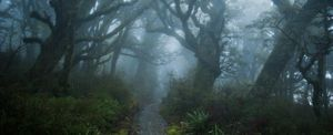 A misty path that looks like something out of Tolkein.