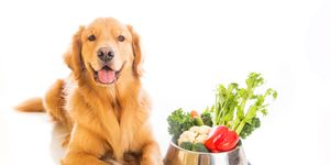 Dog and Vegetables