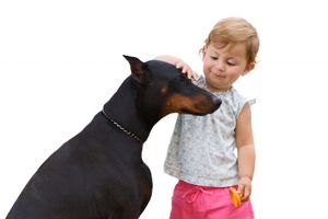 An Adult Doberman and a Child