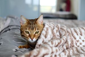Top Household Poisons Affecting Cats
