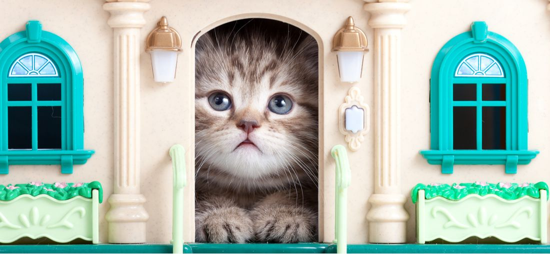 10 Of The Coolest Cat Houses We Ve Ever Seen