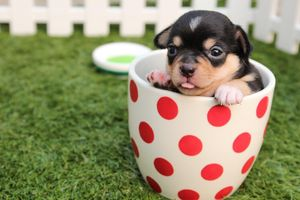 valentine's day puppy names