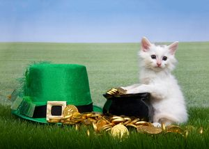 Ten Reasons to Feel Lucky for Your Cat