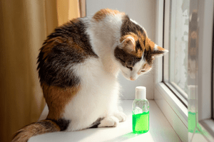 A cat sitting in a windowsill staring down at a small bottle of green hand sanitizer.