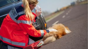How to Approach an Injured Dog Safely