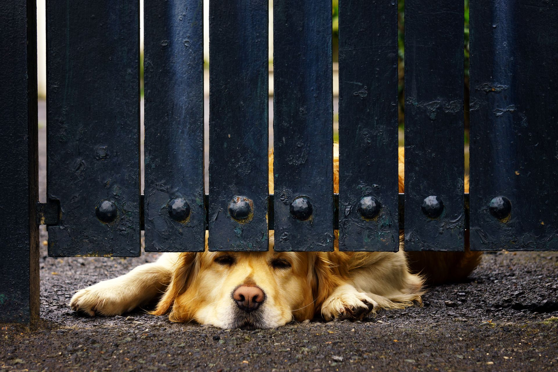 how to stop a dog digging under fence
