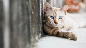 A stray cat leans against a wall.