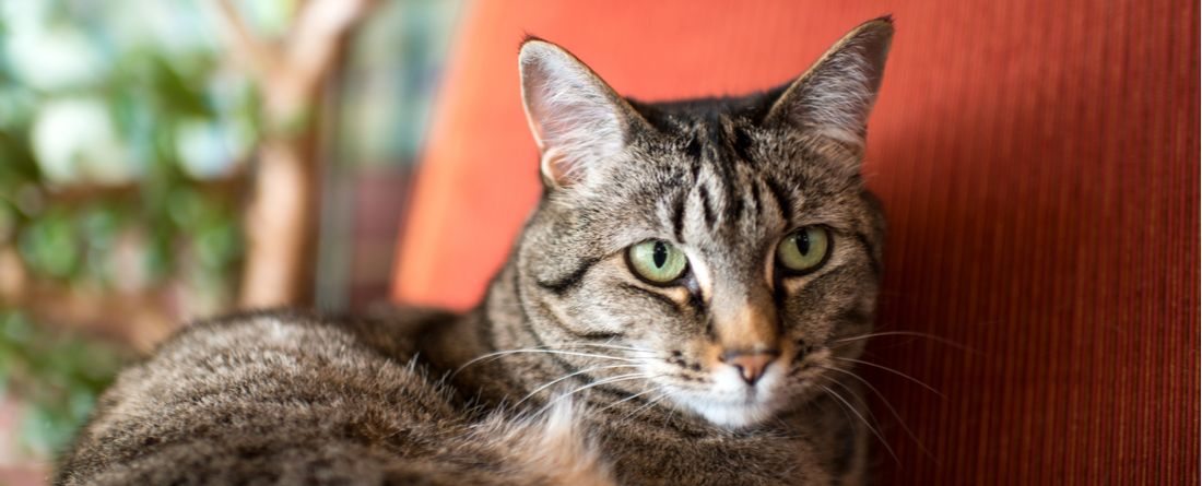 Grooming, fitness, and sleeping tips for parents of senior cats.
