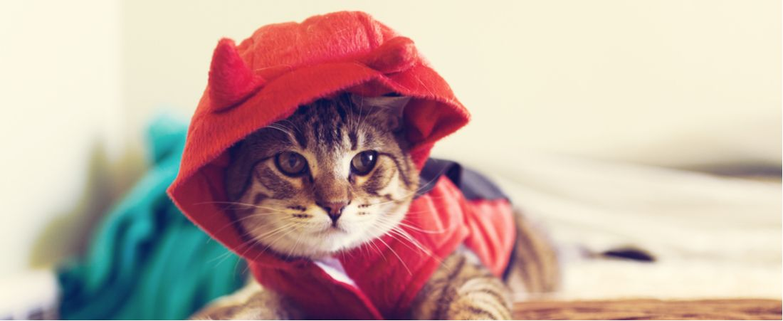 A cat in a devil costume for Halloween.
