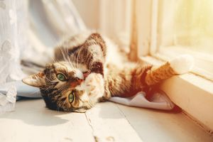 Tips on Clean Air for Indoor Pets