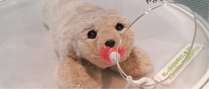 A robotic therapy seal.
