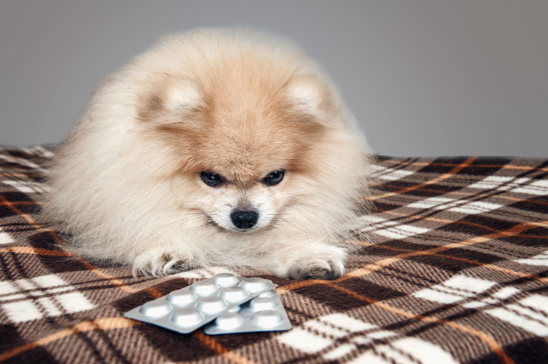 medroxyprogesterone for dogs and cats