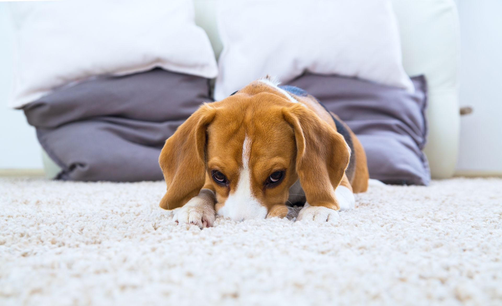 skin discharge or odor in dogs