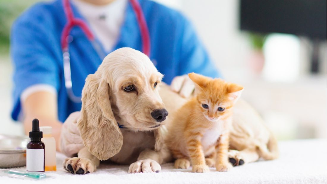 Pet Wellness Plans More Affordable