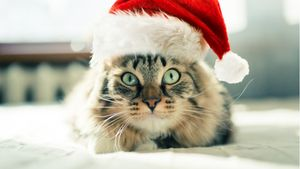 Best Christmas Themed Cat Names
