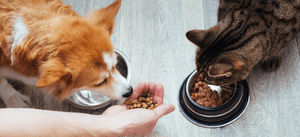 A pet parent feeds their dog and cat.