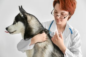 lidocaine for dogs and cats