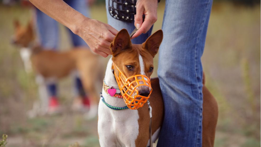 Make a Muzzle for Your Dog