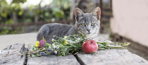 Although cats can eat apples, that doesn't mean they should.